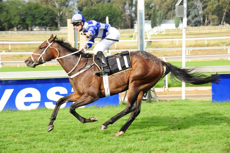 Aramouse makes his debut on the sand at Flamingo Park and is well weighted to win Race 9 at over 1200m today.
