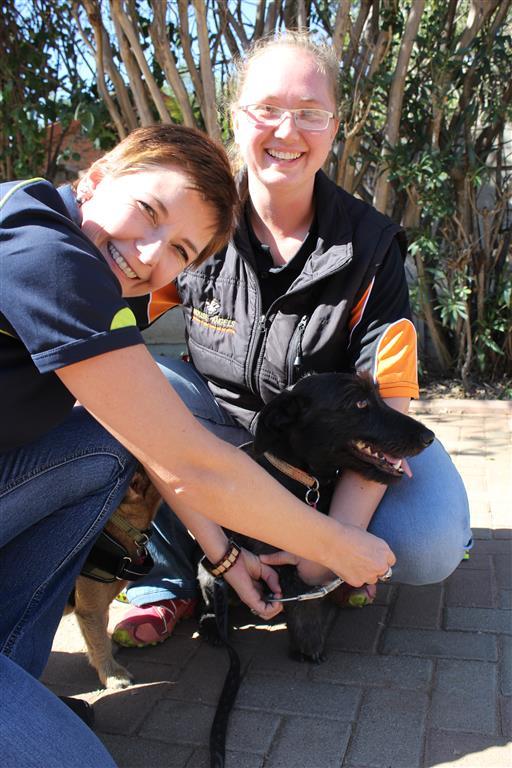 Corné Marais and Chantelle van Deventer arrest a dog for Jail and Bail.