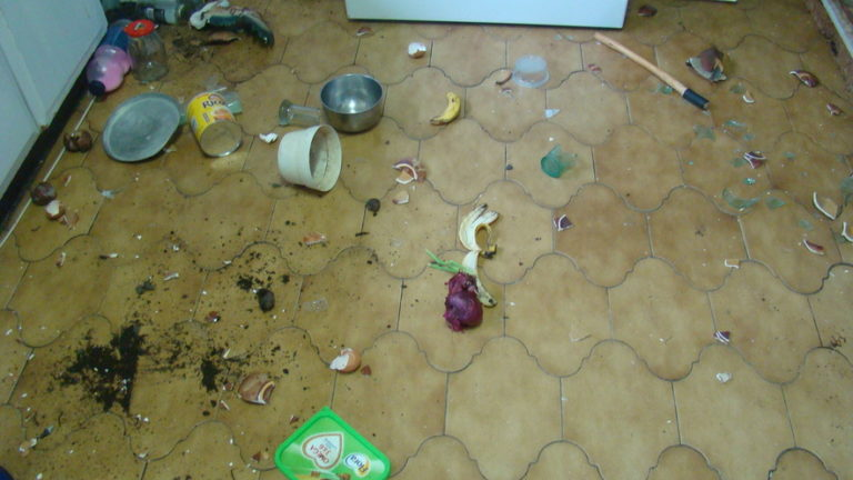 Michael Hickman's house in Mount Moreland is regularly raided by monkeys, leaving his kitchen in a mess.