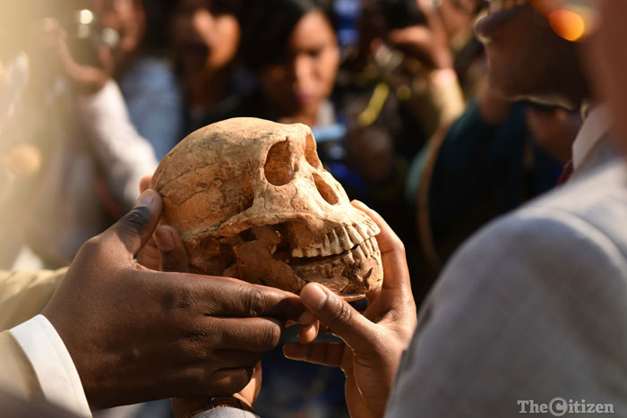A newly found example of a Homo Naledi skeleton named Neo during a media event held at Maropeng, 9 May 2017  to announce more findings from the Rising Star cave system in which Homo Naledi was found a year and a half ago. The age of Homo naledi has been determined to be in the vicinity of 335 000-236000 years old, meaning that it is likely they roamed the earth in the vicinity of Homo Sapiens demonstrating for the first time that another species lived alongside the first humans in Africa. Picture: Neil McCartney
