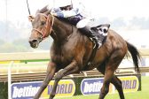 Conditions suit Romany Prince