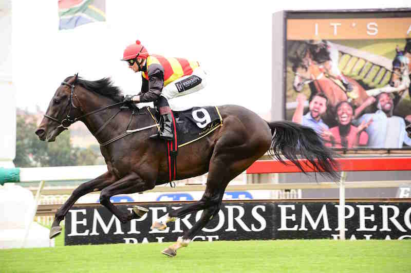 TALENTED. Romi's Boy is in top form right now and will be hard to beat in Race 7 at the Vaal on Thursday.