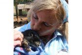 Speed of bunny sterilisations raises concerns
