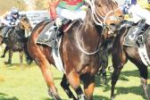 Louis Goosen's runner bids for her third win in a row