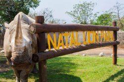 Rhino killing devastates Natal Lion Park authorities