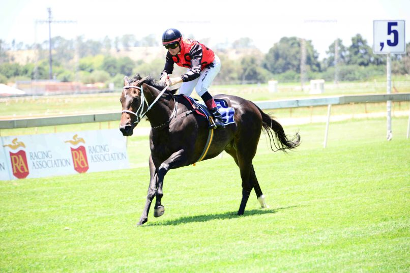 BANKER: Cat's Whiskers, pictured posting her only win, has the best form of all the runners in Race 9 at Turffontein today and should be bankered.
