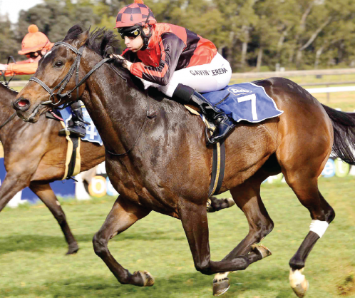 IN FORM: All Night Flight has been knocking at the door in recent starts and could score his third career win when he lines up in Race 7 at the Vaal tomorrow, a MR 80 Handicap over 1000m.
