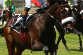 Strydom hoping for a fifth Durban July victory with It's My Turn