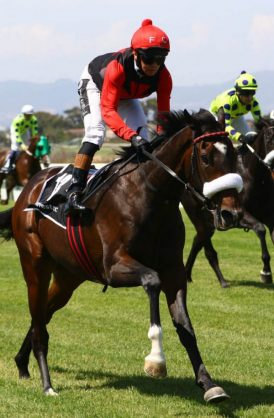 HOPEFUL. Piere Strydom hopes It's My Turn can give him a fifth Vodacom Durban July victory at Greyville Racecourse this afternoon.