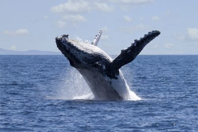 Cape is the best place to see whales