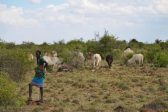 Kenyan cattle herders defend 'necessary' land invasions