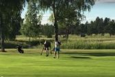 WATCH: Moose chases golfer around on course!