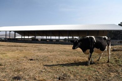 Millions in irregular expenditure had nothing to do with dairy project, Zondo told