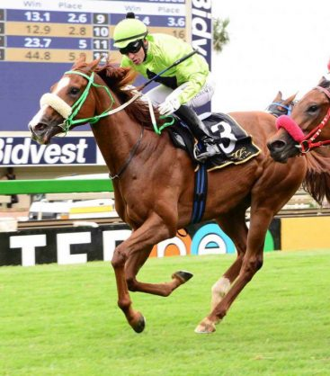 WELL DRAWN. September Bloom has the benefit of a good draw in Race 5 over 2000m on the Inside track at Turffontein today and should be a banker in all bets.