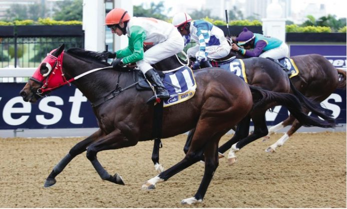 BEST DISTANCE. Roy's Marciano runs in Race 7 at Scottsville on Sunday and with the return to 1200m he looks good value in the third leg of the 2017 New Turf Carriers Rider Cup Interprovincial Jockeys' Challenge.