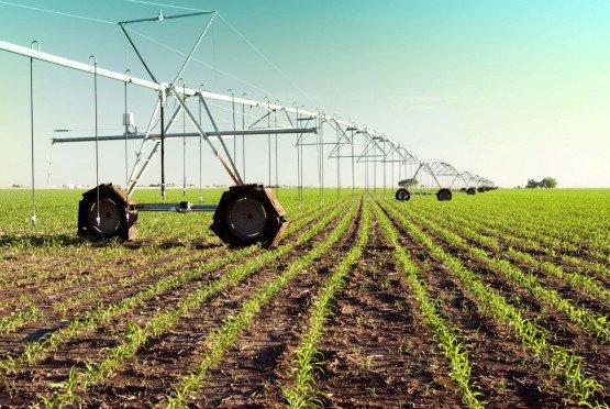 A farm. File photo