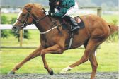 Drop in class will see Raven's Lady score at Chelmsford