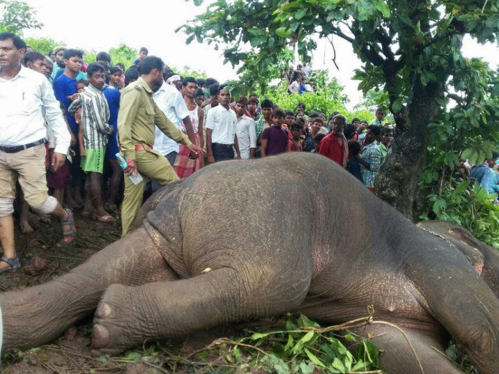 Nawab Shafat Ali Khan said he shot the elephant at point-blank range, but before the animal fell it tried to swing its trunk at the hunting party, forcing him to fire a second time