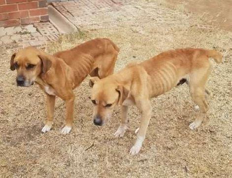 Bloemfontein SPCA probing animal cruelty case after dogs eat