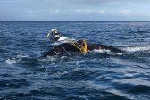 Two sailors die off SA coast despite massive rescue operation