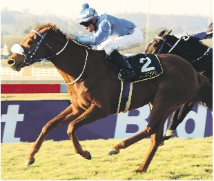 BEST-WEIGHTED. Shatoosh is the best weighted runner in Race 6 at Turffontein tomorrow, a 1450m Pinnacle Stakes, but a few horses in the race might be underrated.