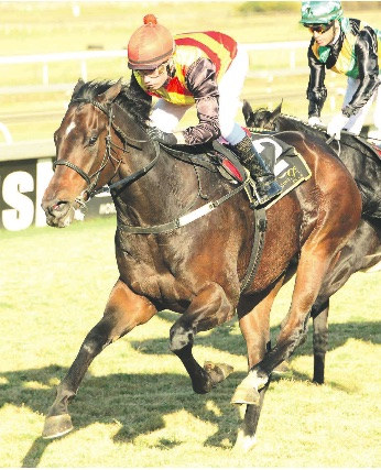 CREDENTIALS. Romi's Boy has a key low draw, is well handicapped and looks a great prospect for the Spring Spree Stakes at Turffontein tomorrow.