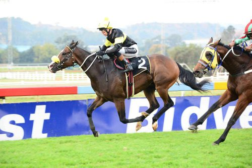 SPRING FOR SPRING. Spring Steel is Piere Strydom's selection to win the Grade 3 Spring Spree Stakes over 1200m on the Inside track at Turffontein today.