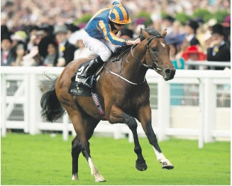 BIG FANCY. Aiden O'Brien-trained Churchill is as short as 8-10 for the Qipco Irish Champion Stakes at Leopards- town on Saturday. PHOTO: Racing Post.