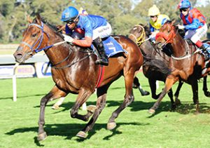 CONTENDER. Yankee Captain will be looking for his fourth win in six starts over 1400m at Turffontein when he lines up in Race 7 tomorrow. Picture: JC Photographics