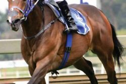 Tarry enters nine runners in R1-million Charity Mile