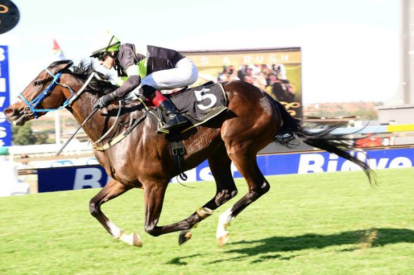 TART VITAL. Matador Man has to be a contender for the Grade 2 Joburg Spring Challenge but cannot afford to give away ground at the start. Picture: JC Photographics