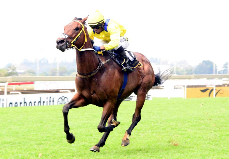 BEST BET. Social Order, who runs in Race 8 at Turffontein today, is Piere Strydom's best bet on the card. Picture. JC Photographics