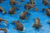 Mexico catches, releases endangered vaquita porpoise