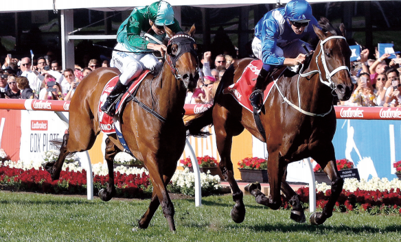 CHAMP: Winx holds off Humidor to win her third Cox Plate. PHOTO: racenet.com.au