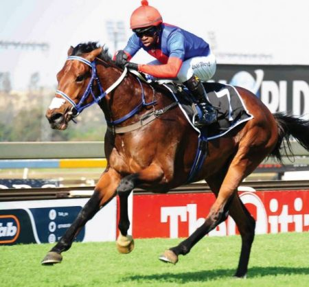 FAVOURITE. Big Bear has been priced up at 2-1 to win the Grade 2 Investec Dingaans at Turffontein on Saturday.