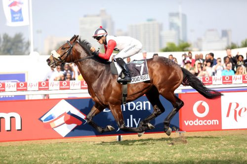 PIERE'S PICK. Crowd Pleaser is one of the horses Piere Strydom feels can win the R2-million Sansui Summer Cup over 2000m at Turffontein today.