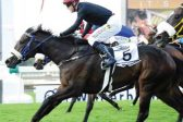 Fillies could rule at this year's Cup, says De Kock