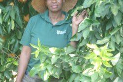 KZN farmer wins provincial entrepreneur award