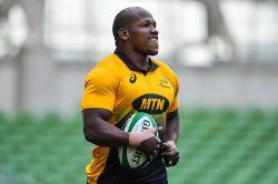 5 reasons why the Springboks need to pick Bongi Mbonambi
