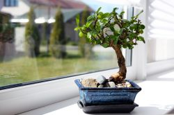 Go green with the proudly South African plant Spekboom