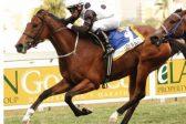 Snowdance heads Cape Fillies Guineas betting