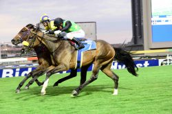 Laing's filly to shine at Fairview again