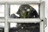 Giant pandas arrive in Finland in Chinese charm offensive