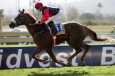 Razed In Black targets another Pinnacle win