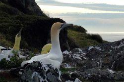 Avian flu detected among seabird species