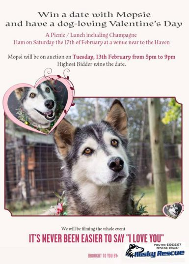 Mopsi the Husky. Picture: Husky Rescue South Africa/Facebook.