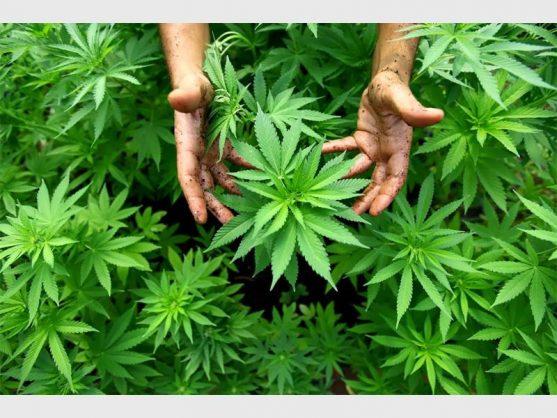 Good news on cannabis
