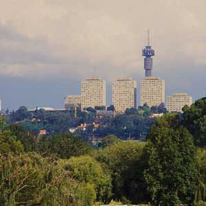 Joburg's urban forest should be protected and not cut down.