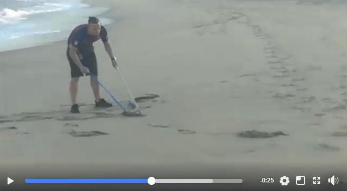 WATCH: Large black mamba caught on KZN beach
