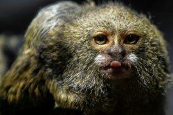 Species in decline worldwide, humans at risk